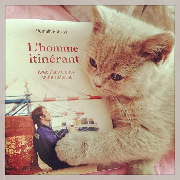 homme itinérant chat