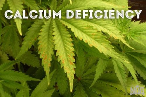 marijuana calcium deficiency