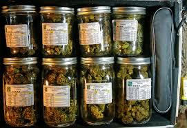 cannabis curing
