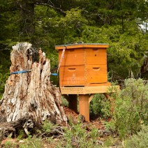 Beehive at the top of Logan Canyon in the Cache-Wasatch forest in Northern Utah. Photo by Dean Garlick.