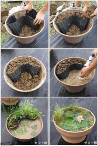 water garden in a pot