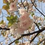 元淵江公園で花見の状況は?バーベキューはできる?コインパーキングは?