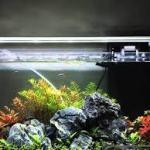 熱帯魚のいる水槽では蛍光灯がいい?LEDがいい?夜間はどうする?