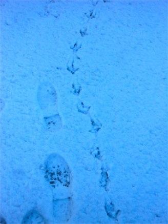 Snow Path