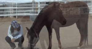 A video capture showing a timid horse with a confident horse inside!