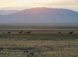 Saving America's Mustangs, a foundation founded by Pickens, proposes a 900-head eco-sanctuary
