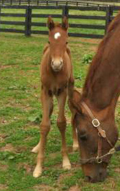 Gemini's first foal.