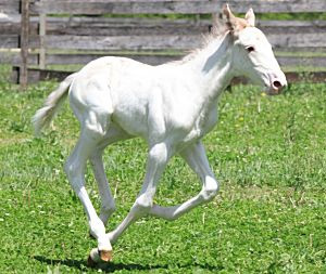 The white standardbred colt born in New Jersey on May 6.
