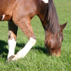 Sweets for my sweet – but how safe is your grass?