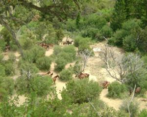 Wild horses in the West Douglas area.