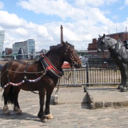 Statue commemorating the Liverpool Carters Working Horse.
