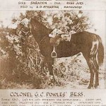 WWI war horse inducted into NZ Racing Hall of Fame