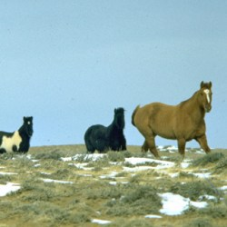 BLM moves to remedy shortcomings over 2014 Wyoming roundup