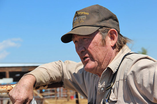 Colorado officials are considering whether to prosecute Tom Davis, who has bought more than 1,700 wild horses from the federal government since 2008, for violating laws meant to deter livestock theft.