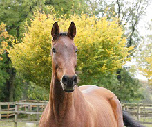 Patrick - aka Sharon - on arrival at the Horse Trust.