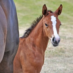 NZ looks to allow frozen horse embryo imports