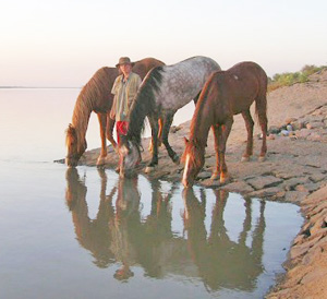 Christy with the horses on the Nile. Seeing the famous river for the first time and being offered a camel to sell to enhance their bank balance were some of the Egyptian delights Christy noted on their blog.