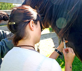 If the horse is touchy in the affected area, sedation may be the only way to get close.