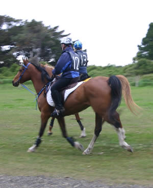 Fat in a horse's diet appears to delay the onset of fatigue, making it particularly useful when horses are required to perform over longer periods of time, such as in endurance rides.