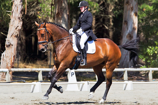 Dunedin's Gillian Edgar and Cordacious continue their domination at Level 4 at the New Zealand Dressage Championships.