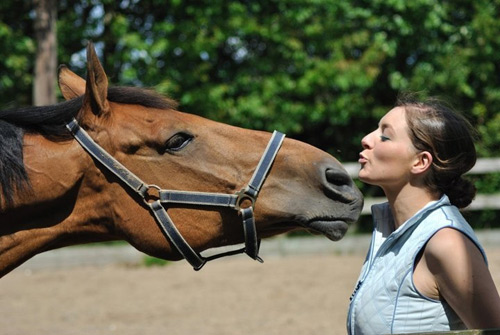 horse_stretching_for_kiss
