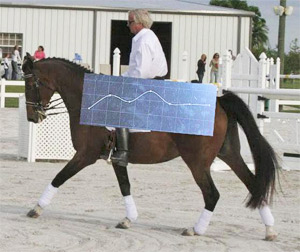 This diagram shows the amount of vertical forces impacted on the rider's physique at a slow trot. The dots moving the most are situated under the rider' seat.