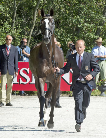 Defending European Champion and German anchorman Michael Jung trots up Halunke FBW at the first horse inspection for the HSBC FEI European Eventing Championships.