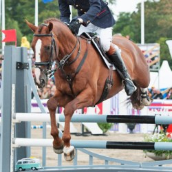 Chilli Morning: Britain's hottest eventing property