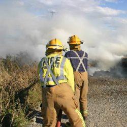 Two thousand horses evacuated ahead of Australian bushfires