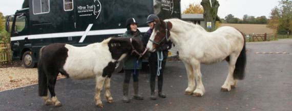 Retiring Scooby, left,  is reunited with his old mate, Topsy. Photo: The Horse Trust