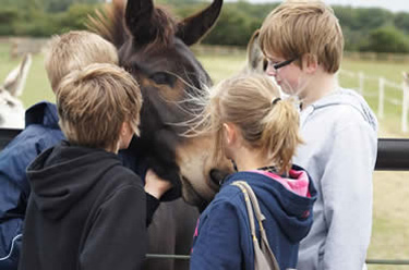 Young supporters meet Nogs the mule at Redwings' Caldecott Visitor Centre.