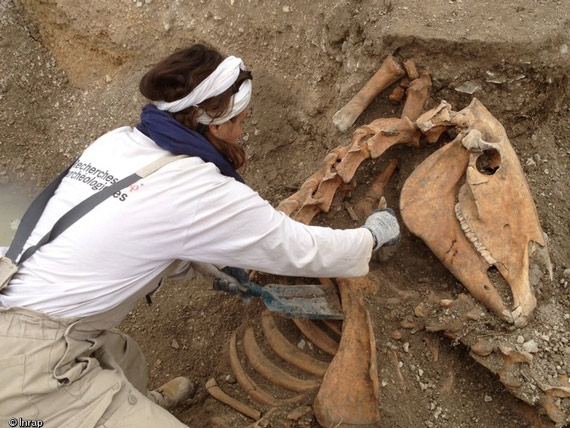 The remains of more than 40 horses were unearthed in a trench in northeastern France. Photos: © Vincent Charpentier and Annie Viannet of the French National Institute for Preventive Archaeological Research (INRAP).
