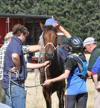 Cooling a horse down after strenuous exercise.