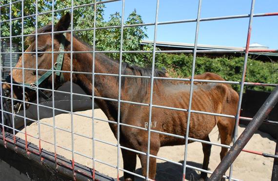 horse-west-australia-case