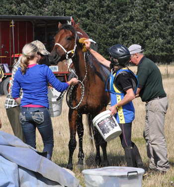 endurance-strapping-groom