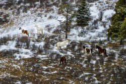 The count revealed fewer horses this year. Photo: Alberta Environment and Sustainable Resource Development