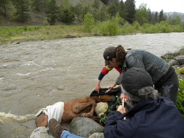 Efforts to save the filly proved successful. Photo: O.A.T.S. Horse Rescue/Facebook