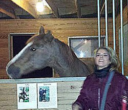 Global fight against horse slaughter needed, summit hears