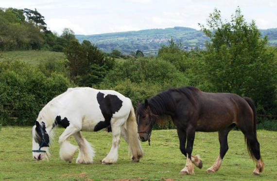 Jumble, left, and his new pal, Izzy. Photo: HorseWorld