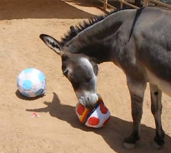Cisco goes for Germany. Photo: El Paso Zoo