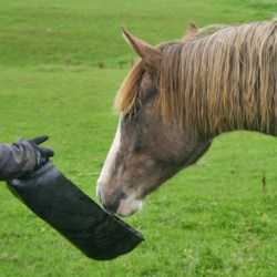 Podgy horses need a weight-loss buddy – and it's you