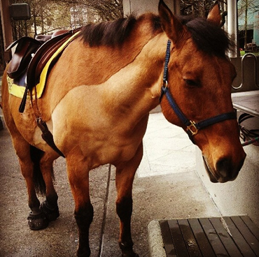 Olin enjoys a little quiet time while on duty in Portland, Oregon. Photo: Portland Police