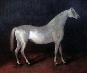 The grey Arabian stallion Smetanka is the ancestor of all Orlov Trotters.