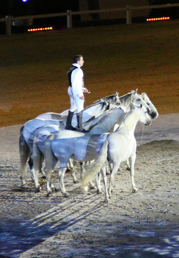 Lorenzo did some incredible performances with this herd of white horses.