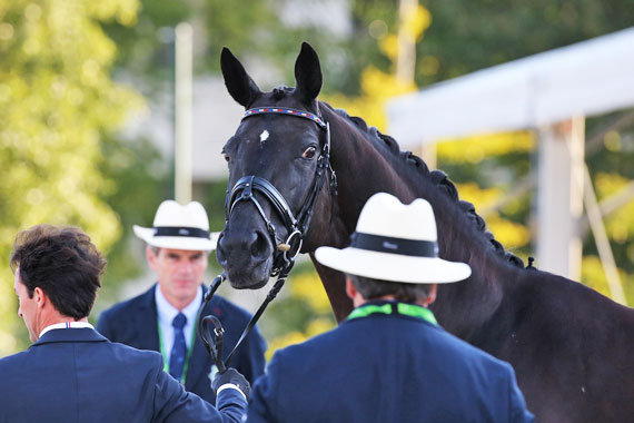 Dressage kicks off two weeks of thrilling horse sport at Normandy.