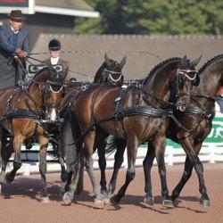 WEG Driving: Dutch reinsmen take early lead