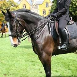 Police horse Thomas steps into retirement