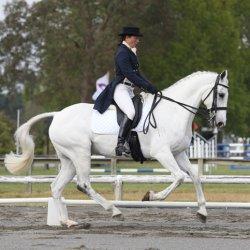 Sad loss of NZ horse after Kentucky 3DE