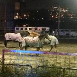 Police horses set loose from stables, found on nearby train tracks