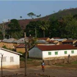 Bats a possible source of ebola epidemic in West Africa